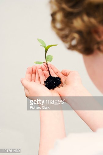Young boy holding seedling : Stock Photo