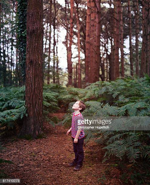 A young boy in a pine forest