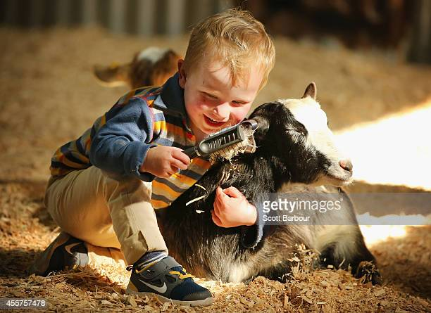 A young boy interacts with farm animals in the animal nursery at the 159th annual Royal Melbourne Show at the Royal Melbourne Showgrounds on...