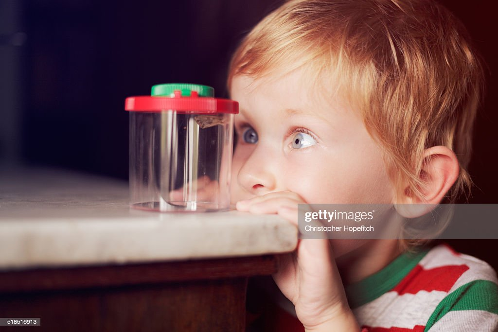Young boy looking at a moth : Stock Photo