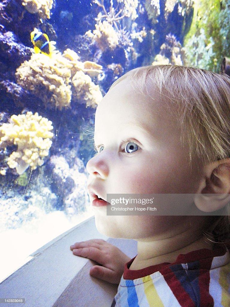 Young boy looking at aquarium : Stock Photo