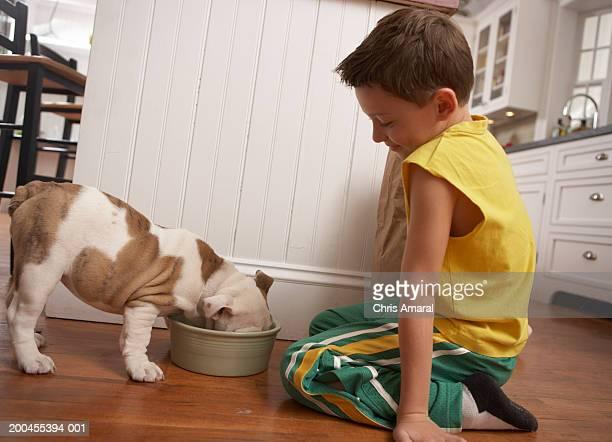 Young boy (6-8) looking at dog eat