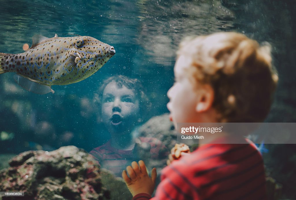 Young boy looking at fish in aquarium