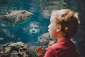 Young boy looking at fish in aquarium