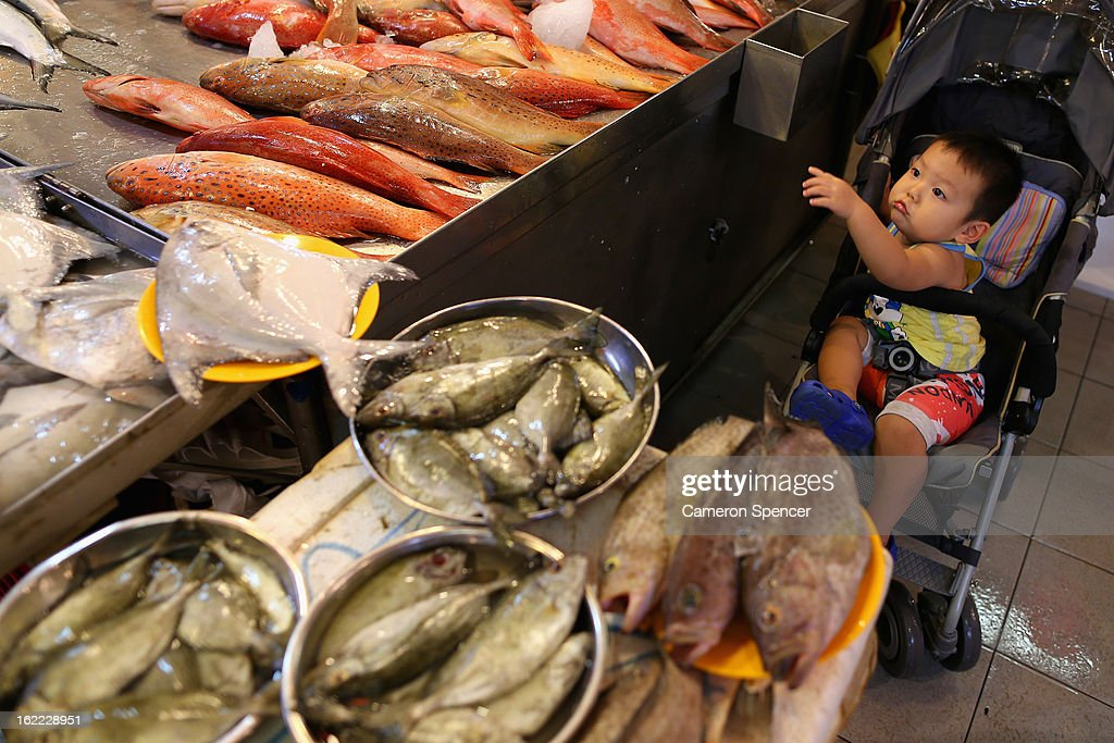 A young boy looks at fish for sale at the Singapore Chinatown Complex Wet Market on February 21, 2013 in Singapore. The Chinatown Complex Wet Market is a traditional Asian food market popular with elder Singaporeans that features fresh seafood, meat, vegetables, Chinese groceries and a variety of exotic delicacies. The bustling complex floors are never dry with melting ice and water used to clean the floors, fish and vegetables spilling through the space, thus earning the name 'Wet Market'. The markets have retained their relevance by guaranteeing freshness and a personal service between stall mongers and loyal customers.