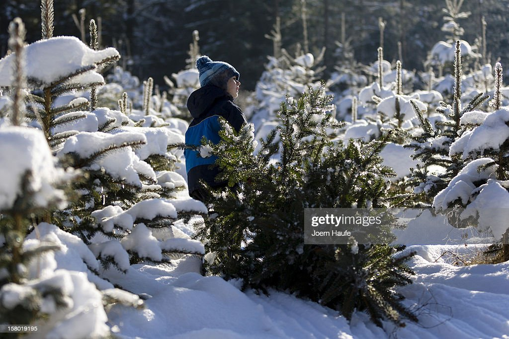 A young boy named Erik pulls out a Christmas tree he chose and cut down in a forest on December 8, 2012 in Fischbach, Germany. Forestry officials in the state of Saxony officially opened the 2012 Christmas tree season for people who want to retrieve their tree from designated forests rather than just buying it readily cut.