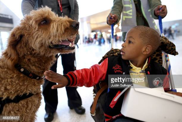 A young boy pets a therapy dog named Toby inside Terminal 2 at San Francisco International Airport on December 3 2013 in San Francisco California The...