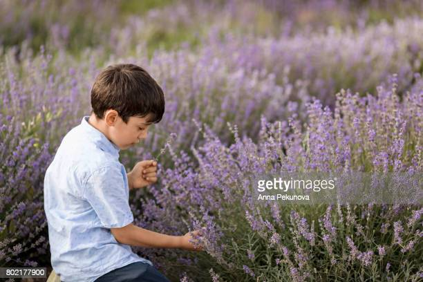 Young boy picking up lavender