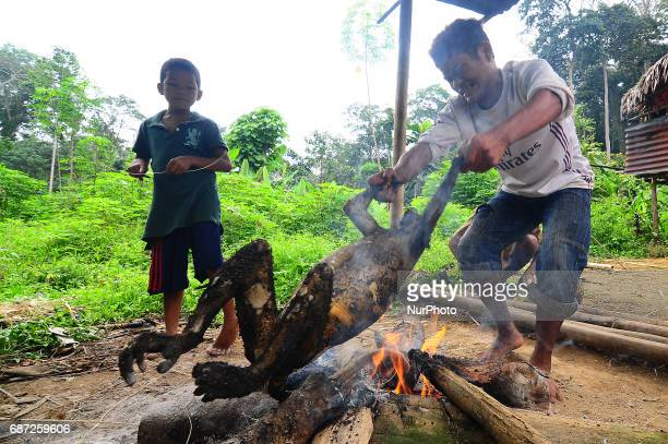 A young boy placed a silvery lutung above campfire to burn the fur before they cut it into pieces in a rural village in Malaysia on 23 May 2017 Che...