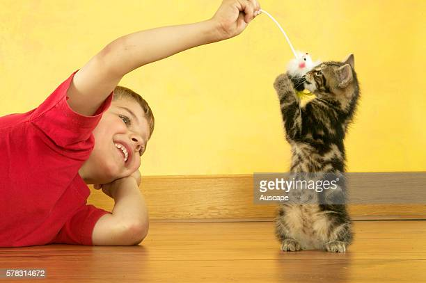 Young boy playing with kitten Felis catus indoors