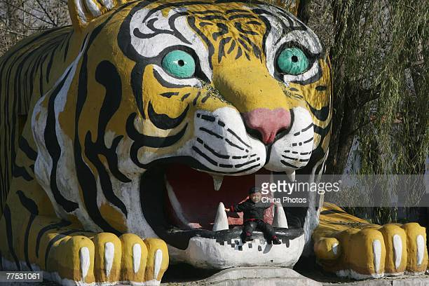 A young boy plays in a Siberian tiger sculpture at the Hengdaohezi Breeding Center for Felidae on October 26 2007 in Harbin of Heilongjiang Province...
