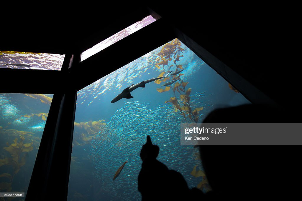 A young boy points to a shark at the Monterey Bay Aquarium