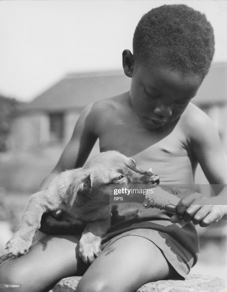 A young boy shares his ice cream with a puppy, circa 1960.