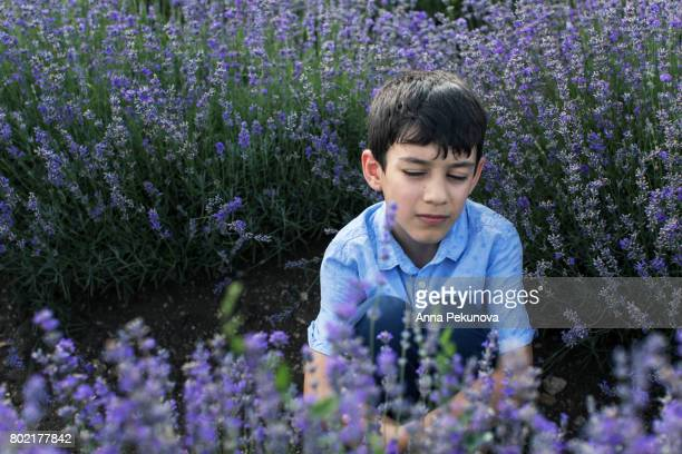 Young boy sitting in a lavender field