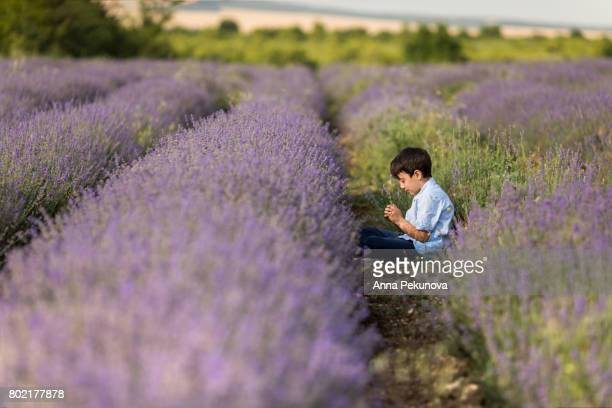 Young boy sitting on the ground in a field of lavender