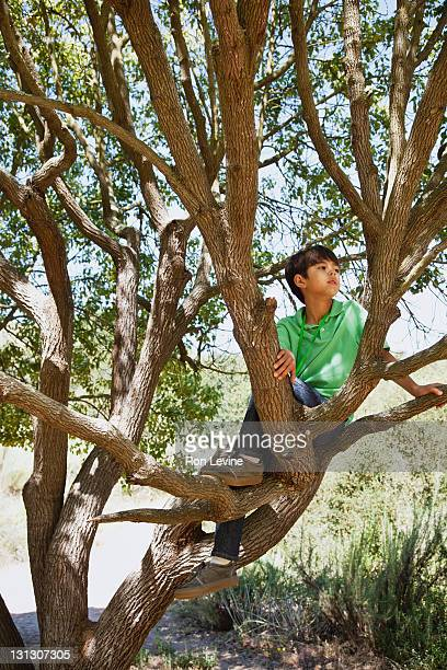 Young boy sitting on tree limb, looking away