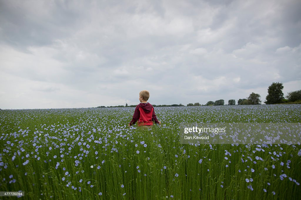 A young boy stands in a field of blue flowering crops as historial re-enactors in period dress gather in the Allied Bivouac camp on June 19, 2015 in Waterloo, Belgium. Around 5000 historical re-enactors will amass this evening to stage the 1st battle re-enactment, the 'French attack', in front of around 200,000 spectators from around the world. The event will mark the 200th anniversary of the Battle of Waterloo. The 1815 battle saw the overthrow of Napoleon Bonaparte and the restoration of Louis XVIII to the French throne.