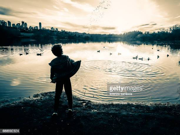 Young boy throws food on ducks on the lake