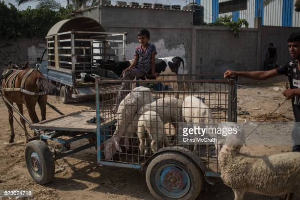 A young boy waits for with his sheep at an animal market in AlBureji on July 20 2017 in Gaza City Gaza For the past ten years Gaza residents have...