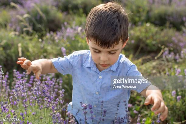 Young boy walking through lavenred field