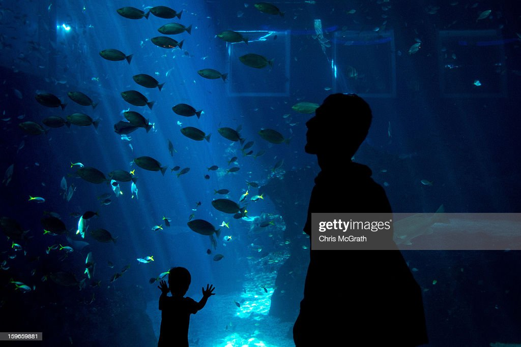 A young boy watches marine wildlife on display at Resort World Sentosa's Marine Life Park, January 18, 2013 in Singapore. The Marina Life Park is Resort World Sentosa's newest attraction and is the world's largest aquarium, with 100,000 marine animals of over 800 species housed in 45 million litres of water.