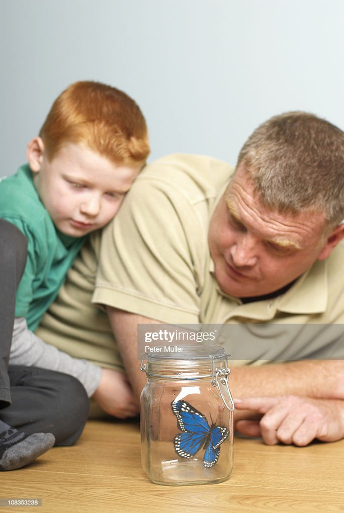 Young boy with dad looking a butterfly : Stock Photo