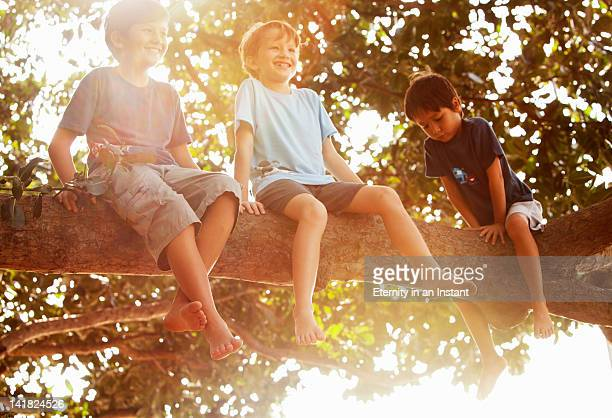 Young boys sitting in tree, smiling, backlit