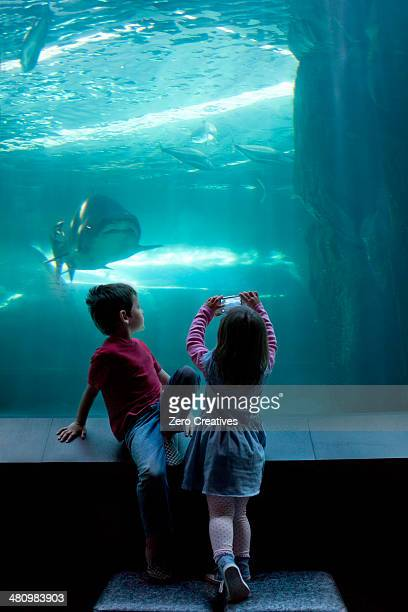 Young brother and sister photographing on camera phone at aquarium