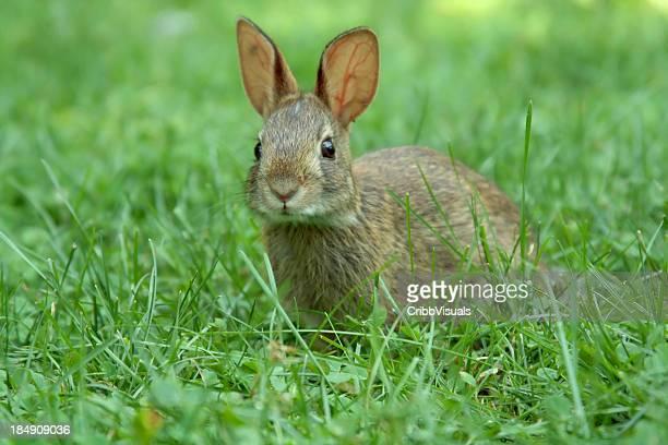 Giovane coniglio in giardino di campagna