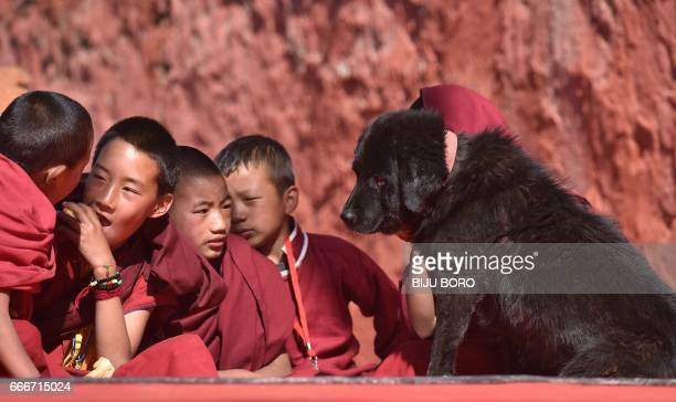 Young Buddhist monks play with a dog on the last day of exiled Tibetan spiritual leader the Dalai Lamas visit to the Yiga Choezin ground in Tawang...
