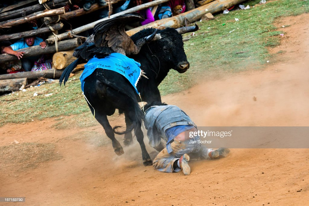 A young bullfighter falls down after being attacked by a wild bull during the Yawar Fiesta, a ritual fight between the condor and the bull, held in the mountains of Apurímac, on 30 July 2012 in Cotabambas, Peru. The Yawar Fiesta (Feast of Blood), an indigenous tradition which dates back to the time of the conquest, consists basically of an extraordinary bullfight in which three protagonists take part - a wild condor, a wild bull and brave young men of the neighboring communities. The captured condor, a sacred bird venerated by the Indians, is tied in the back of the bull which is carefully selected for its strength and pugnacity. A condor symbolizes the native inhabitants of the Andes, while a bull symbolically represents the Spanish invaders. Young boys, chasing the fighting animals, wish to show their courage in front of the community. However, the Indians usually do not allow the animals to fight for a long time because death or harm of the condor is interpreted as a sign of misfortune to the community.