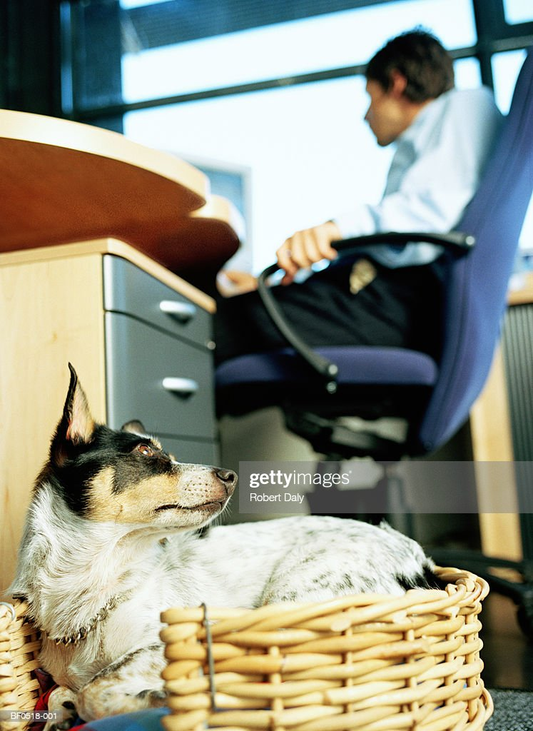 Young businessman working in office with pet dog (focus on dog) : Stock Photo