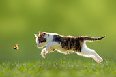 young cat hunting butterfly on a meadow backlit