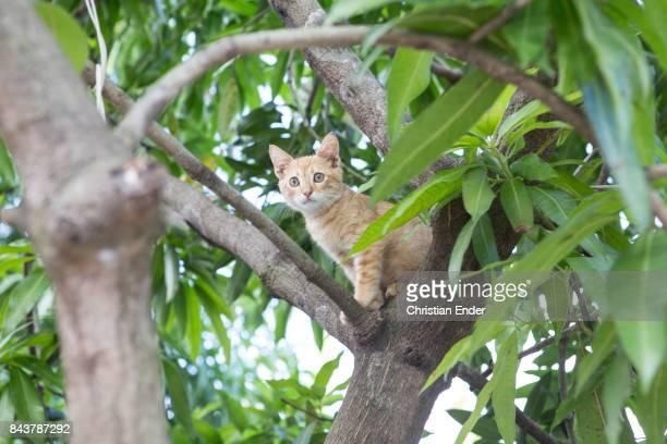 Santa Domingo Dominican Republic November 30 2012 A young cat is sitting inside a tree in the poor neighbourhood 'Los Alcarrizos' in Santa Domingo