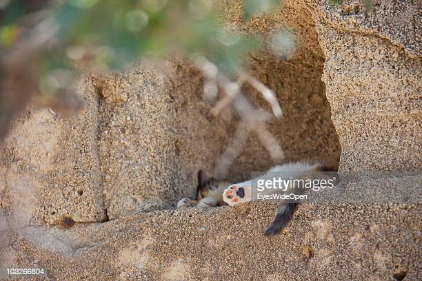 Young cat sleeping at the Acropolis of Lindos on July 04 2010 in Lindos Greece The old town of Lindos is famous for the ancient Acropolis The...