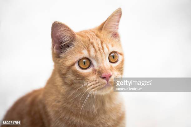 Young cat with golden eyes