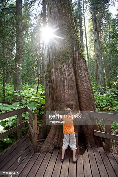 Young Caucasian Boy Hugging a Large Tree