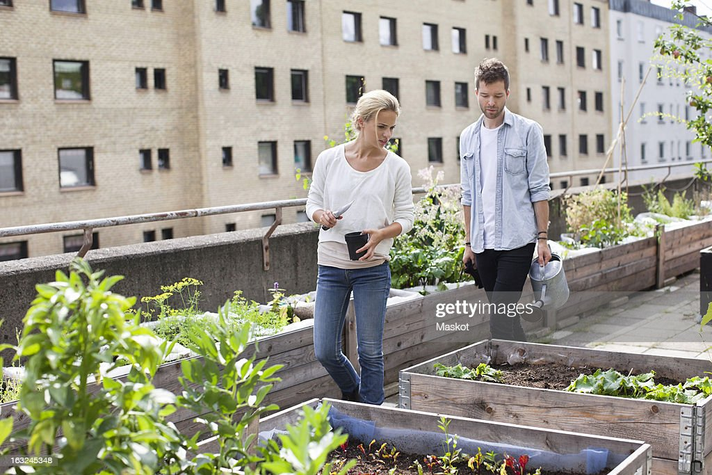 Young Caucasian couple examining potted plants at urban garden