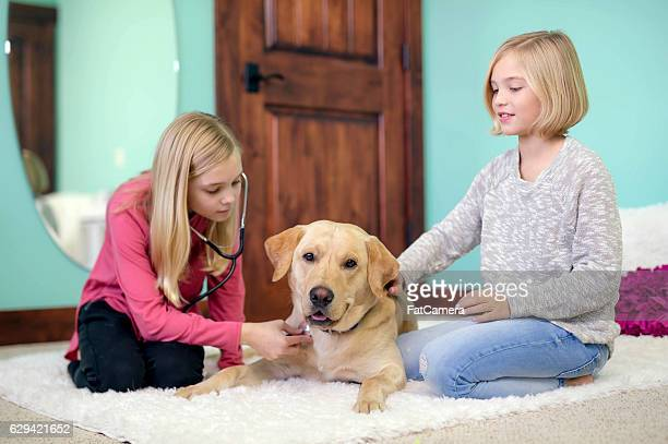 Young caucasian girls playing veterinarian at home with their labrador