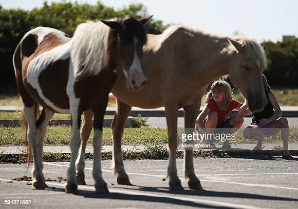 Young children check out the wild ponies as they roam free August 24 2016 in Assateaque Island Maryland Assateaque Island National Seahore has a...