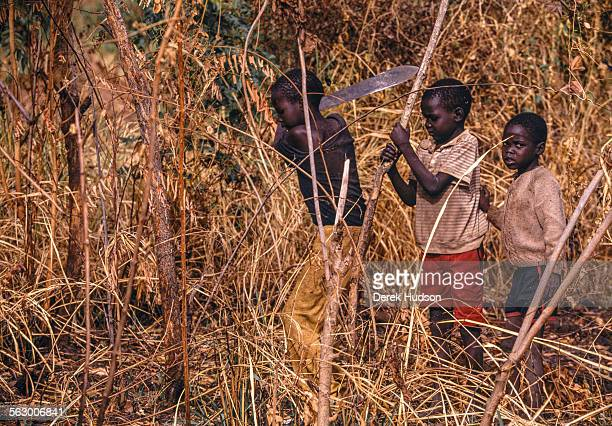 Young children one wielding a machete cut down small trees for firewood near their place of a refuge ana abandoned mission near Palotaka South...