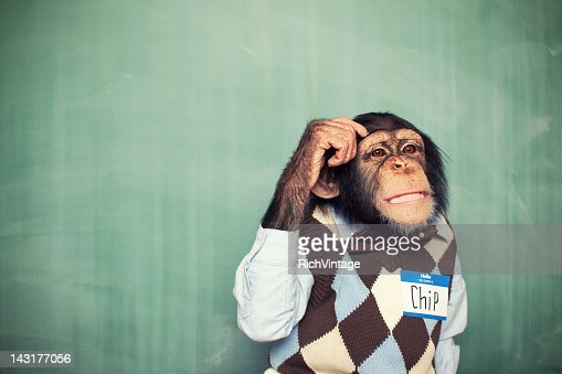 Young Chimpanzee Nerd Student Scratches Head