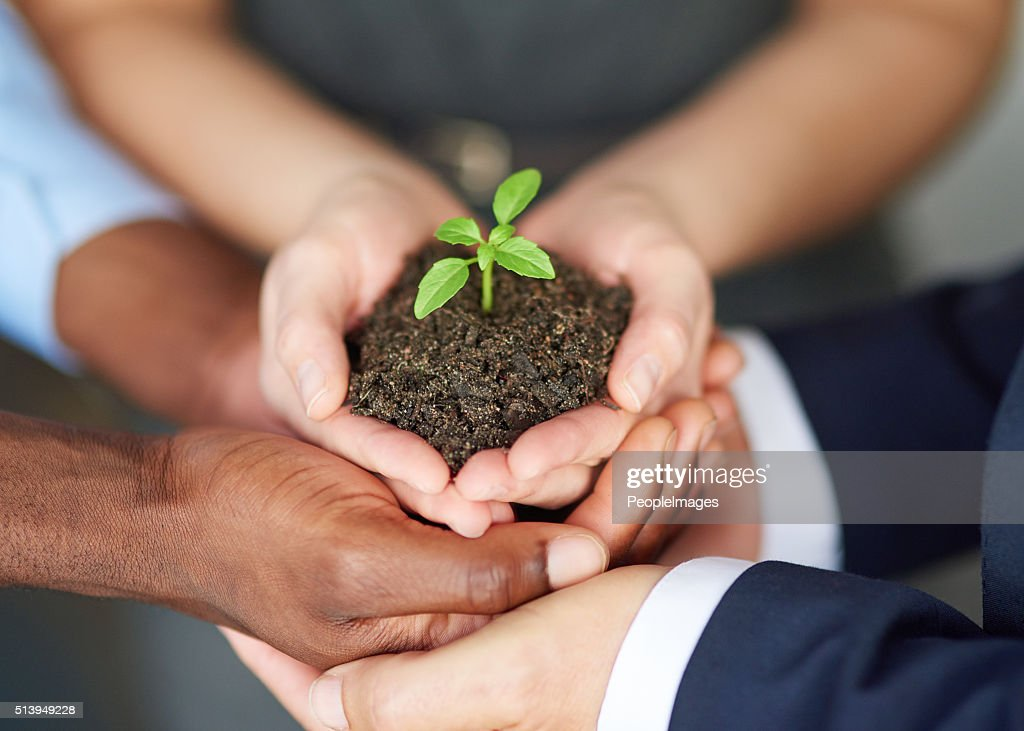Young companies need nurturing : Stock Photo
