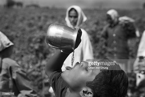 A young cotton worker drinks water on November 11 2006 in Warangal Andrah Pradash India Cotton pickers most women and children make about 3040 rupees...