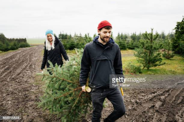 Young Couple Carrying Christmas Tree Freshly Cut Down From Pine Forest