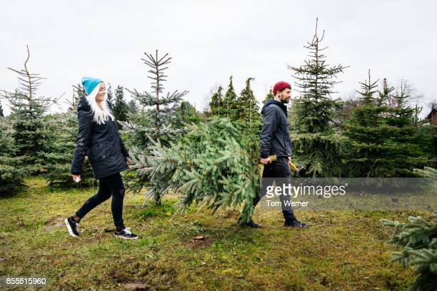 Young Couple Carrying Freshly Cut Down Pine Tree To Take Home For Christmas
