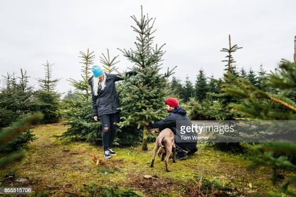 Young Couple Cutting Down Pine Tree To Take Home For Christmas
