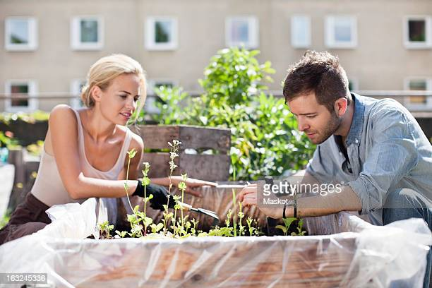 Young couple gardening at urban garden