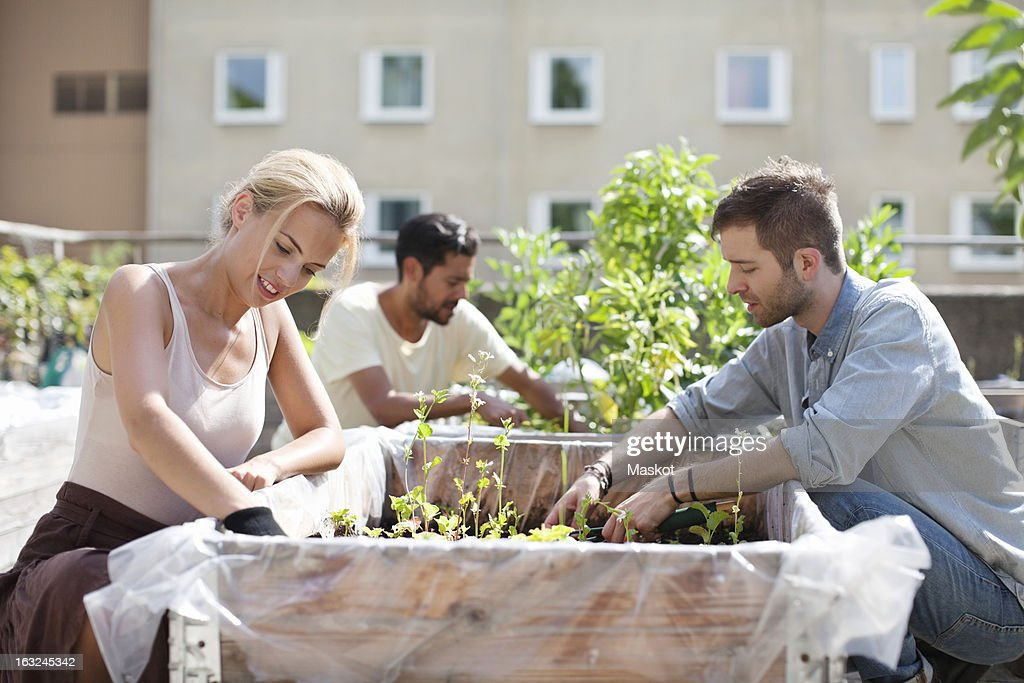 Young couple gardening at urban garden with man in the background