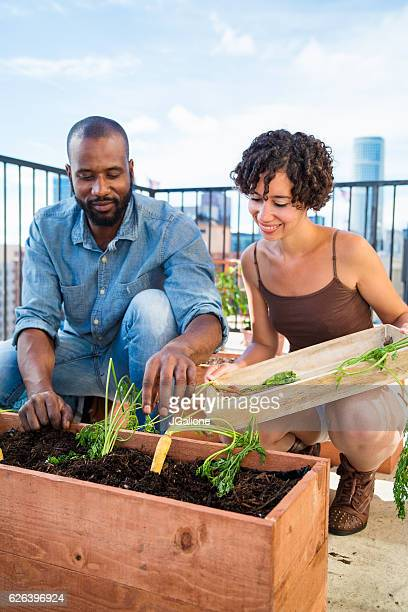 Young couple harvesting carrots from their rooftop garden